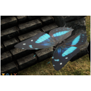 Giant Butterfly Pet