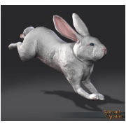 Release 5/6 White Rabbit - from 2014!