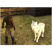 Tamed Pet: Large Arctic Wolf
