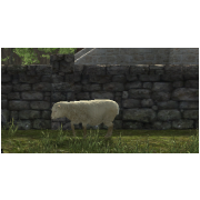 SHEEP (Tamed)