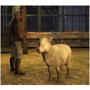 Tamed Pet: Sheep