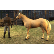 Tamed Pet: Palomino Horse