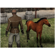 Tamed Pet: Bay Foal